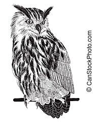 sketch of owl on a branch
