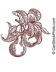 Vector Sketch of pear