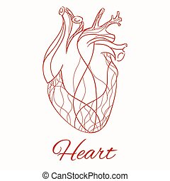 Vector sketch of the real heart