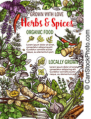 Vector sketch poster of spices and herbs food - Herbs and ...
