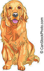 portrait of a close-up of smiling red gun dog breed Golden Retriever sitting