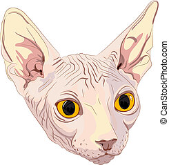 vector sketch the cat breed Sphynx