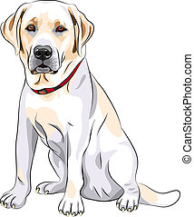 portrait of a close-up of serious yellow dog breed Labrador Retriever sits