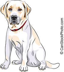 portrait of a close-up of serious yellow dog breed Labrador Retriever sits