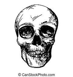Vector Skull Drawing