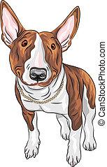 vector smiling cartoon Bull Terrier Dog breed - color sketch...