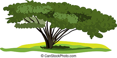 vector spreading tree on a white background