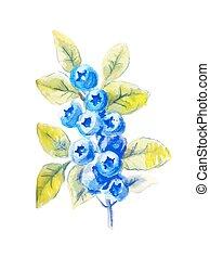 Vector sprig of blueberries in watercolor
