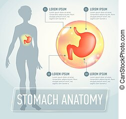 Vector stomach infographics banner illustration - ...
