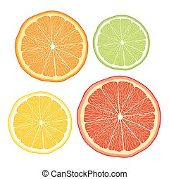Vector stylised orange, lemon, grapefruit, lime on white