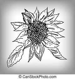 Vector sunflower. Illustration by hand. Monochrome drawing.