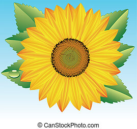 sunflower with drop of water