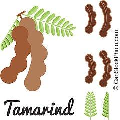 vector tamarind,flat design