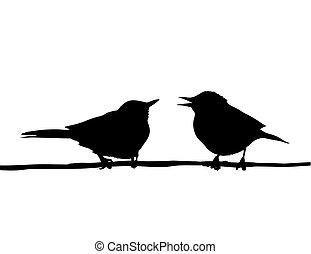 vector, tekening, twee vogels, zittende , op, tak