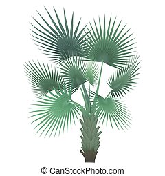 Vector tropical exotic palm tree isolated.