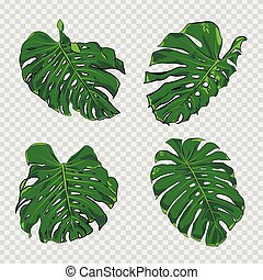 Vector tropical palm leaves.