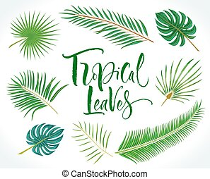 Vector tropical palm leaves