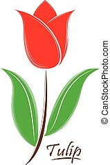 Vector tulip flower isolated on a white background