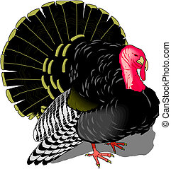 vector turkey bird