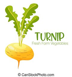 Vector turnip isolated on white background.Vegetable illustration for farm market menu. Healthy food design poster. Cartoon style vector illustration