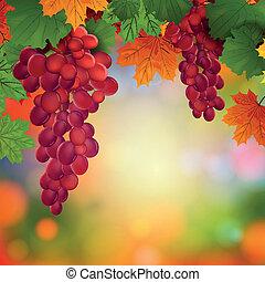 vector, uvas de vino, con, hojas