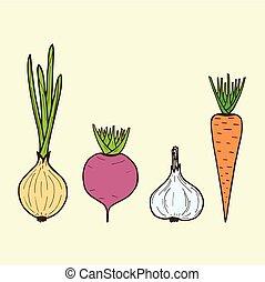 vector vegetarian vegetables - onion, carrot, beet, garlic. Vector roots.