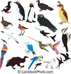 vector, verzameling, van, vogels