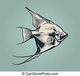 Vector vintage illustration of fish