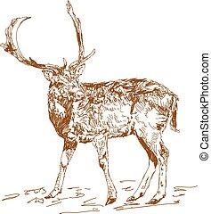 Vector vintage style engraved hand drawn deer animal hunting...