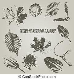 Vector Vintage Style Floral Elements, rosewood std font,...