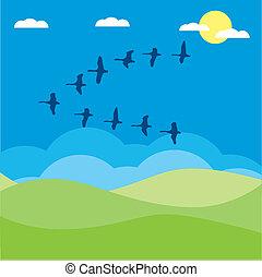 vector, vogels, illustratie, migrerend