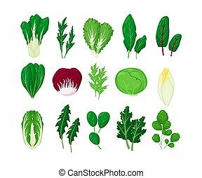 vector, vrijstaand, achtergrond., bladeren, illustratie, natuurlijke , groentes, groene, set, witte , slaatje, leaf., sla