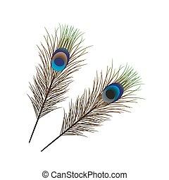 vector, vrijstaand, peacock veer