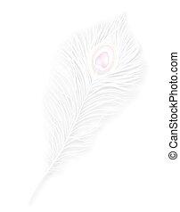 vector, vrijstaand, witte pauw, feather., eps10