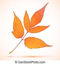 vector watercolor autumn branch