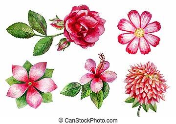vector watercolor flowers