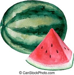Vector watercolor hand drawn watermelon illustration.