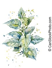 watercolor illustration of a bush of stinging nettles -...