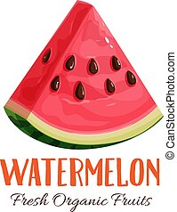 Vector watermelon illustration