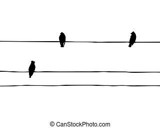 vector, waxwings, draad, silhouette, vogels