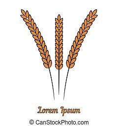 Vector wheat ears on white