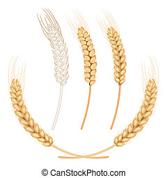 vector wheat isolated on white