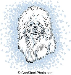 vector white cute dog Bichon Frise breed