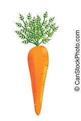vector, zanahoria