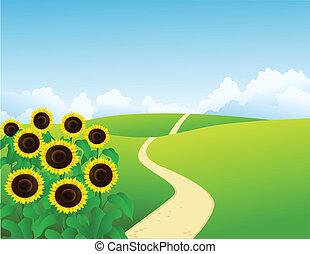 vector, zonnebloemen, landscape