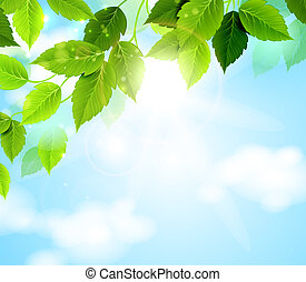 vector892green leaves - branch with green leaves hanging...