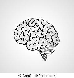 human brain - vectorised sketch of the human brain on gray ...