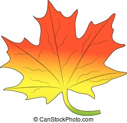 maple leaf - vector,maple leaf isolated on white background