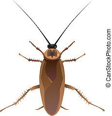 vectors, cucaracha