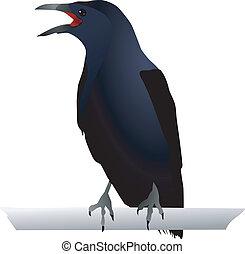 vectors, cuervo